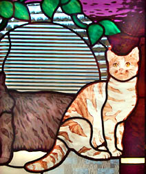 Cat Family detail